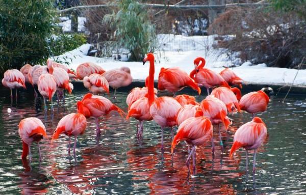 Зоопарк в Праге зимой