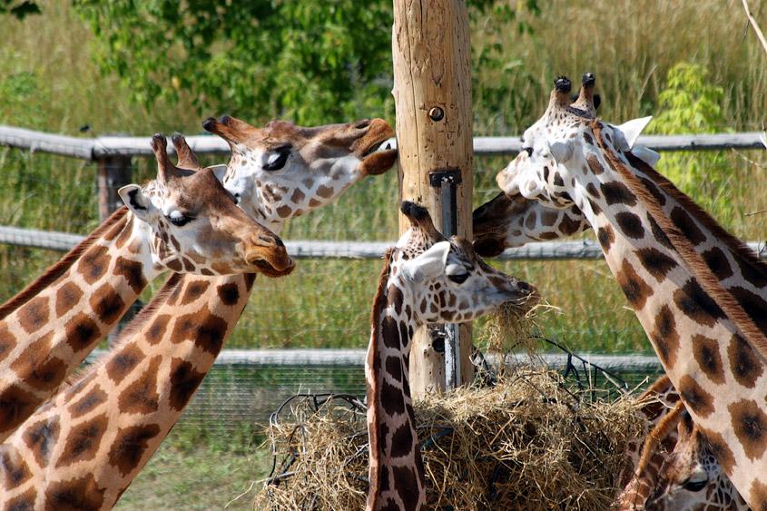 Пражский зоопарк Троя