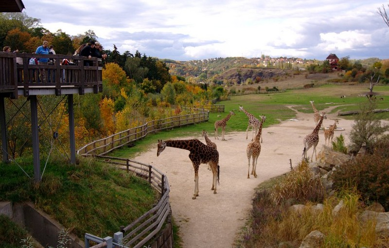 Посетить в Праге зоопарк